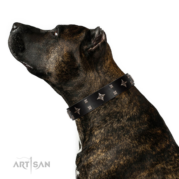Safe leather Amstaff collar for irresistible look