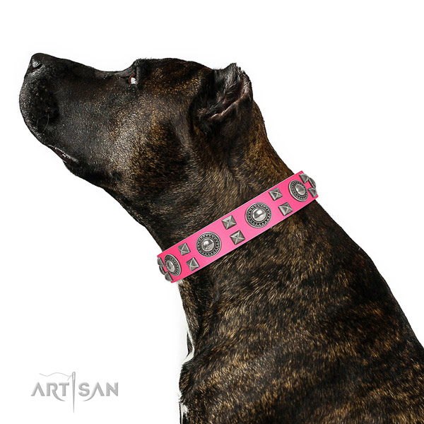 Handcrafted walking leather Amstaff collar
