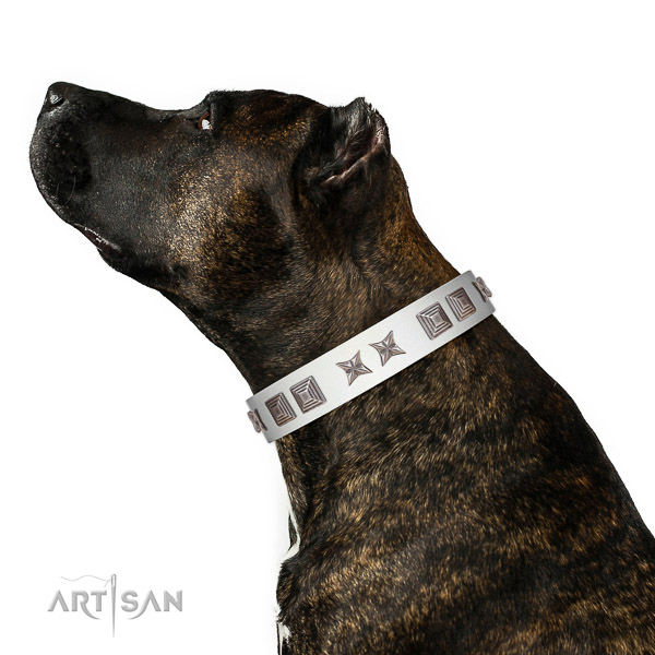 Comfortable leather Amstaff collar of first class materials