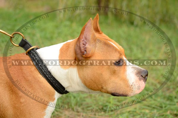 Leather Choke Amstaff Collar Braided