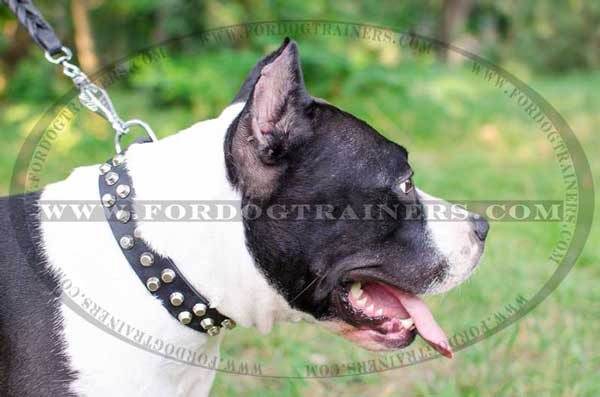 Leather Amstaff Collar Studded Dog Item