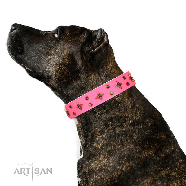 Amstaff perfect fit natural genuine leather dog collar with embellishments