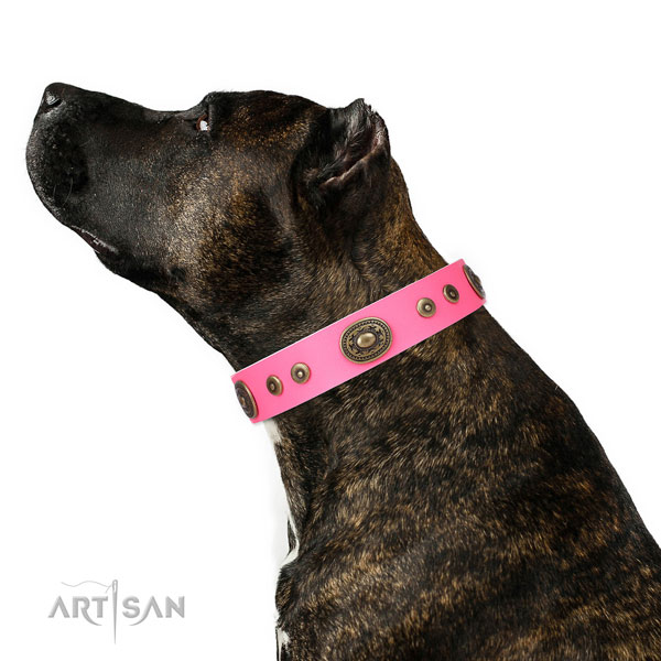 Amstaff convenient genuine leather dog collar with decorations