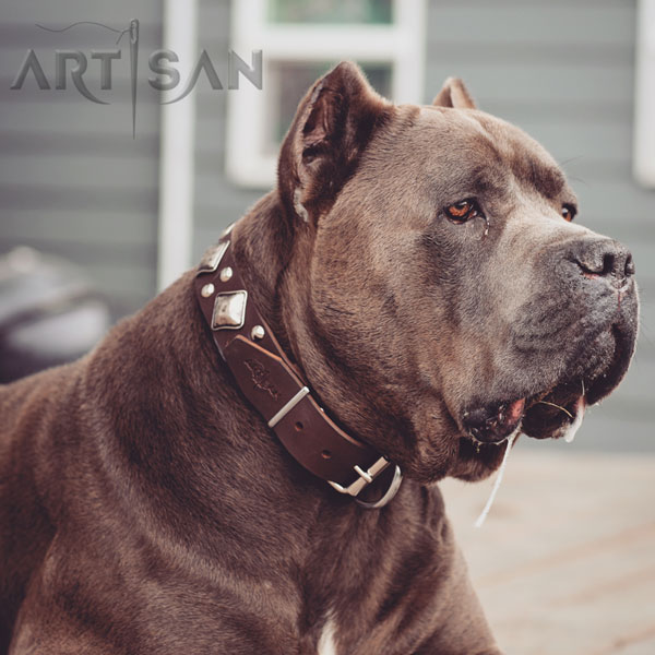 Brown Leather Cane Corso Collar with Old Silver-Like Plated Adornments