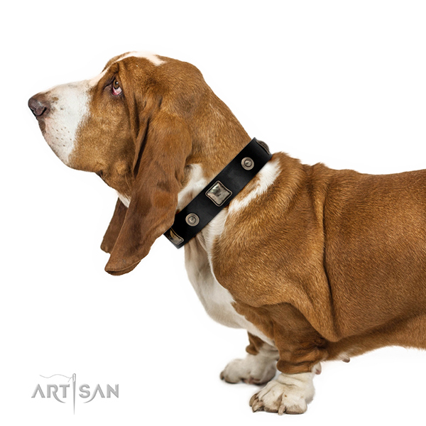 FDT Artisan leather dog collar for daily walks