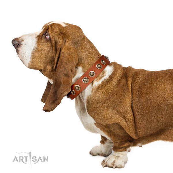 Strong Leather Basset Hound Collar with Sturdy Traditional Buckle