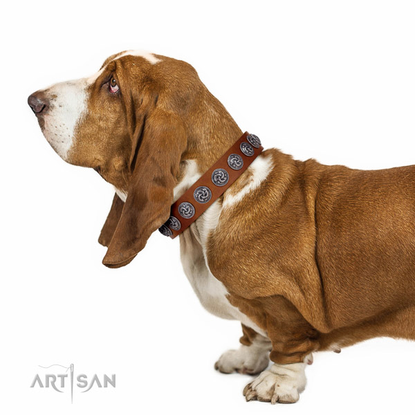 Comfortable Basset Hound Collar for Daily Activities