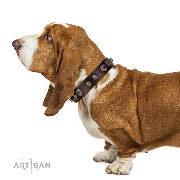 Royal look brown leather Basset Hound collar with silver-like covered decorative elements