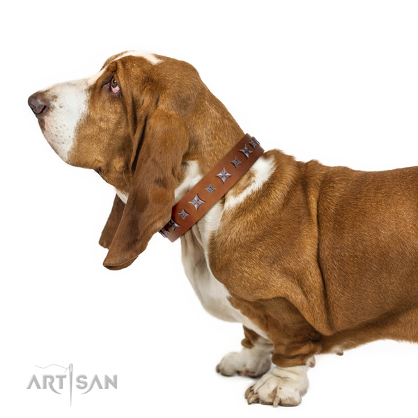 Extraordinary walking tan leather Basset Hound collar with chic decorations