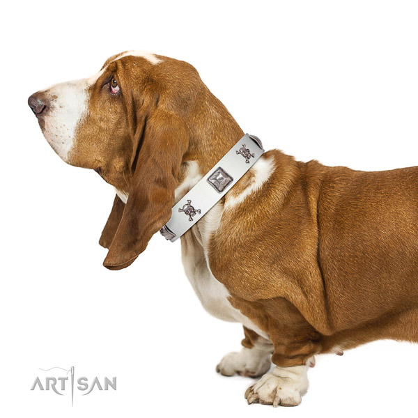 Remarkable walking white leather Basset Hound collar with