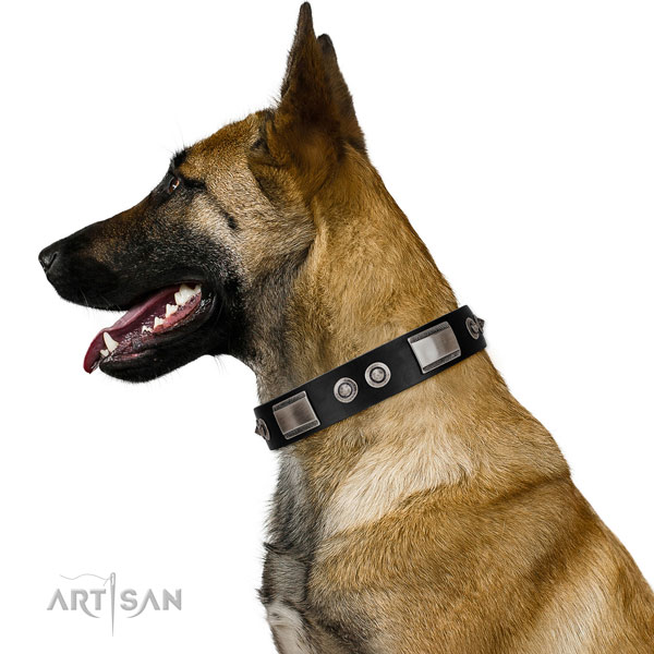 Adjustable leather Belgian Malinois collar for walking