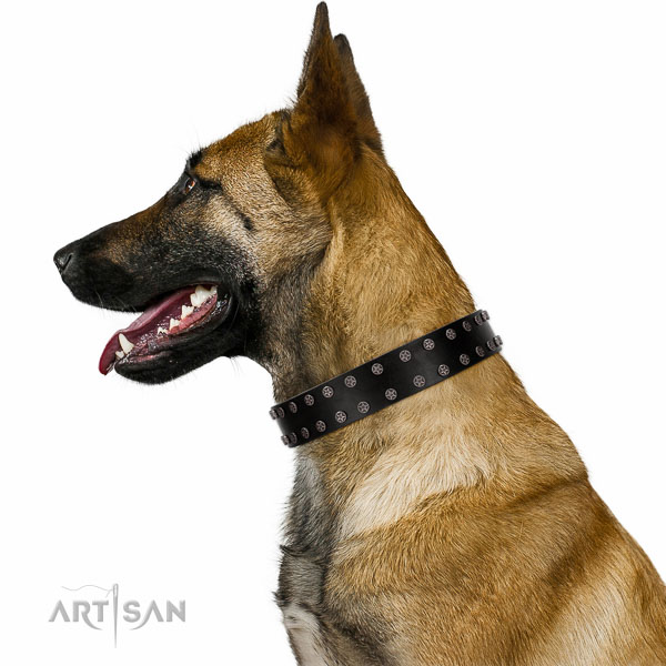 Walking top-notch quality walking leather Belgian-Malinois collar
