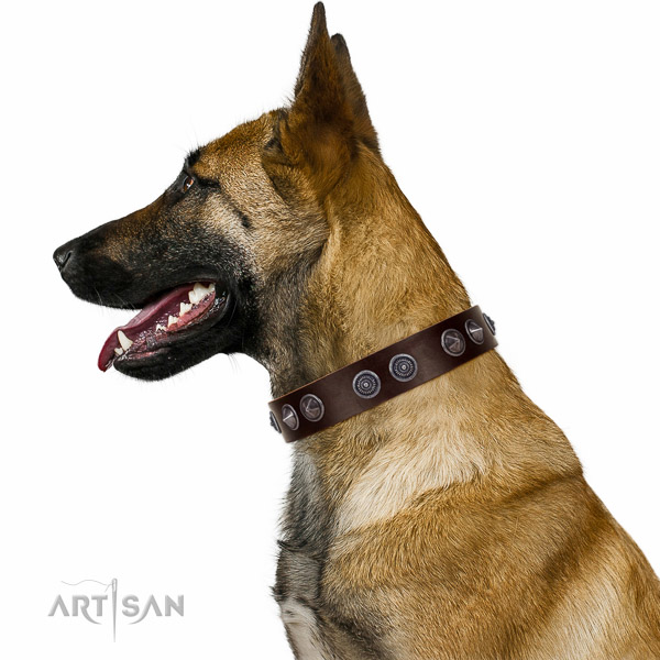 Extraordinary walking Brown leather Belgian-Malinois collar with chic decorations