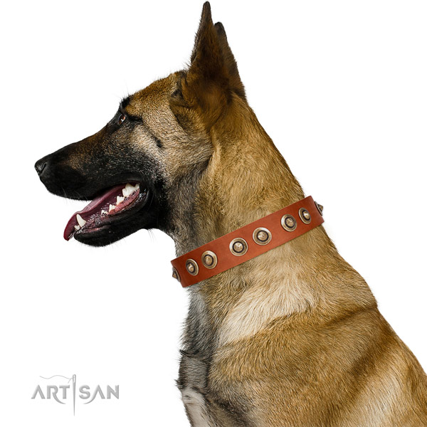 Highest Quality Tan Leather Belgian Malinois Collar with Riveted Decorations