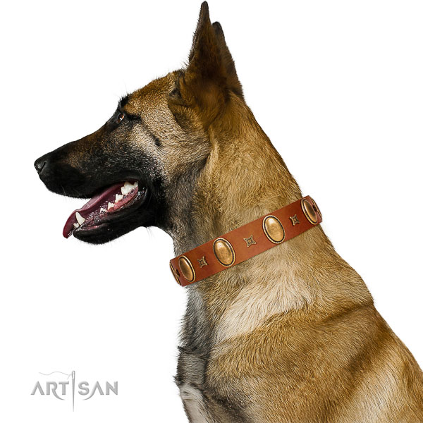 Genuine leather Belgian Malinois collar for best ever walking