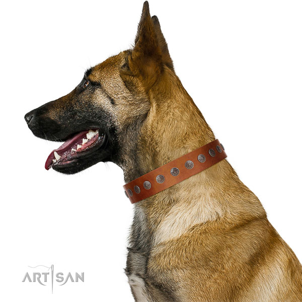 Walking top-notch quality walking leather Belgian Malinois collar
