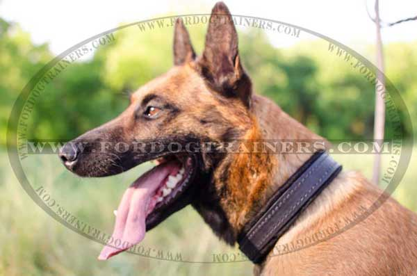 Belgian Malinois Brown Leather Collar