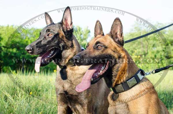 belgian shepherd dog breeds   dog supplies