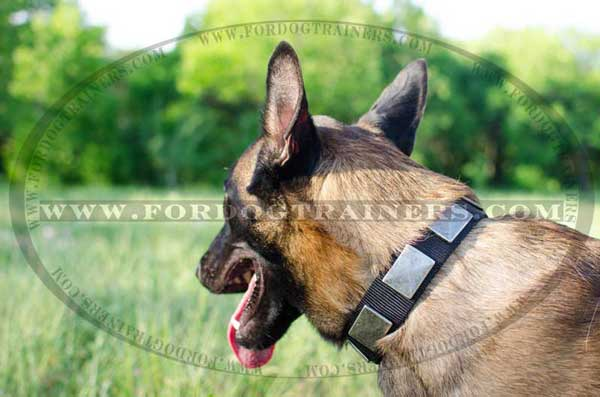 Everyday Malinois Nylon Collar Good for Rainy Weather