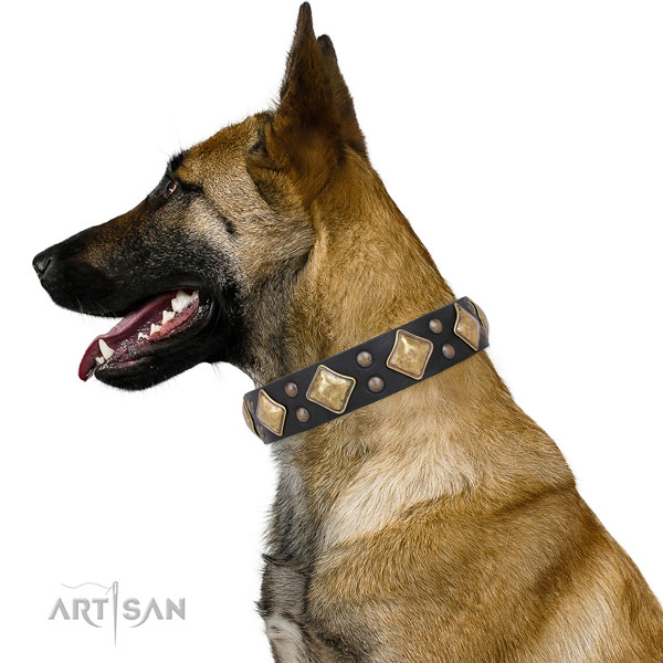 Belgian Malinois extraordinary full grain natural leather dog collar with embellishments