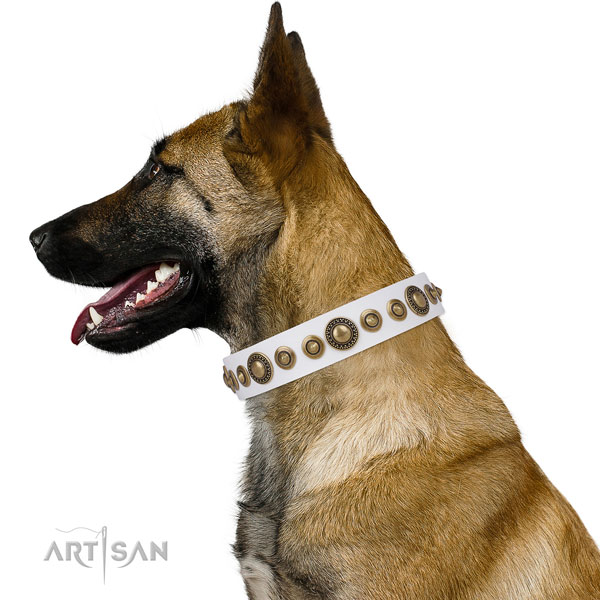 Belgian Malinois convenient natural genuine leather dog collar with studs
