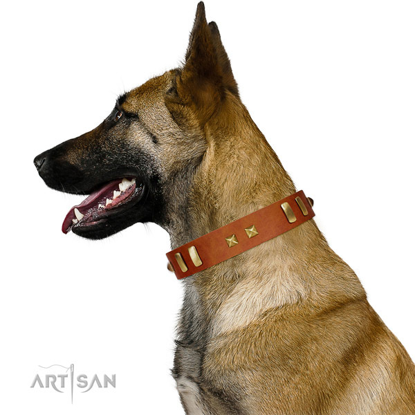 Supreme design Belgian Malinois collar for fashionable walking