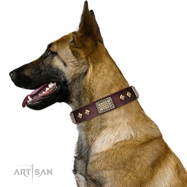 Belgian Malinois walking dog collar of top quality leather