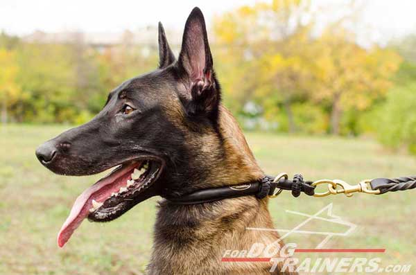 Round Leather Choke Collar for Belgian Malinois
