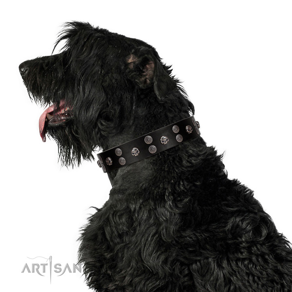 Extraordinary walking black leather Black Russian Terrier collar with chic decorations