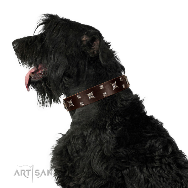 Comfortable Wearing Black Russian Terrier Collar of