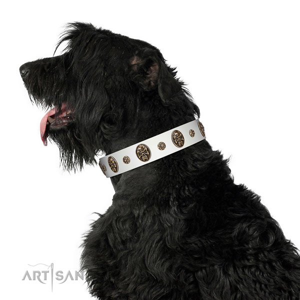 Wonderful Black Russian Terrier Artisan leather collar for better control