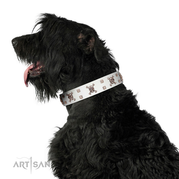Extraordinary walking white leather Black Russian Terrier collar with chic decorations