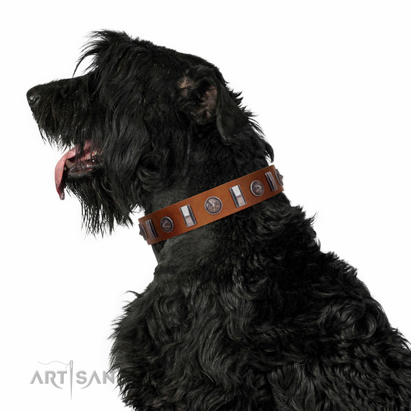 Walking top-notch quality walking leather Black Russian Terrier collar