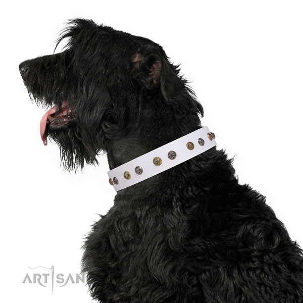 Black Russian Terrier awesome genuine leather dog collar with adornments