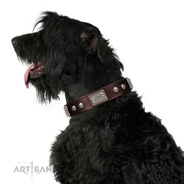 Black Russian Terrier easy wearing dog collar of flexible leather
