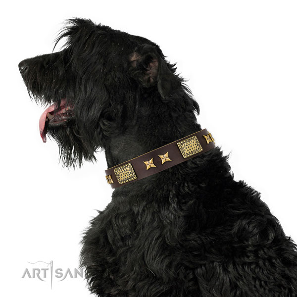 Black Russian Terrier daily walking dog collar of exquisite quality genuine leather