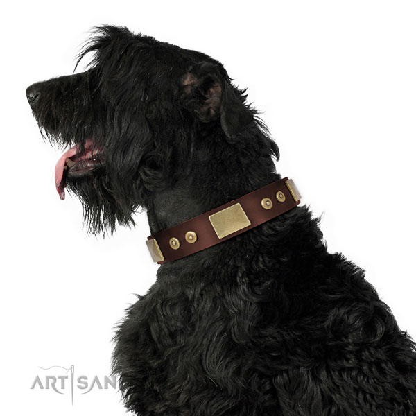 Black Russian Terrier everyday walking dog collar of awesome quality natural leather