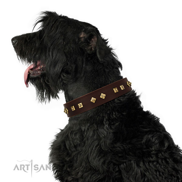 Black Russian Terrier everyday walking dog collar of exquisite quality natural leather
