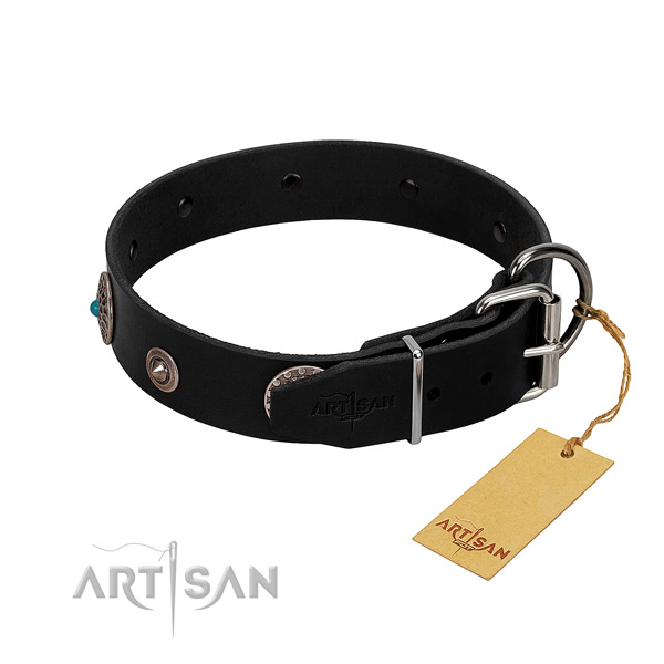 polished leather dog collar with chrome plated hardware