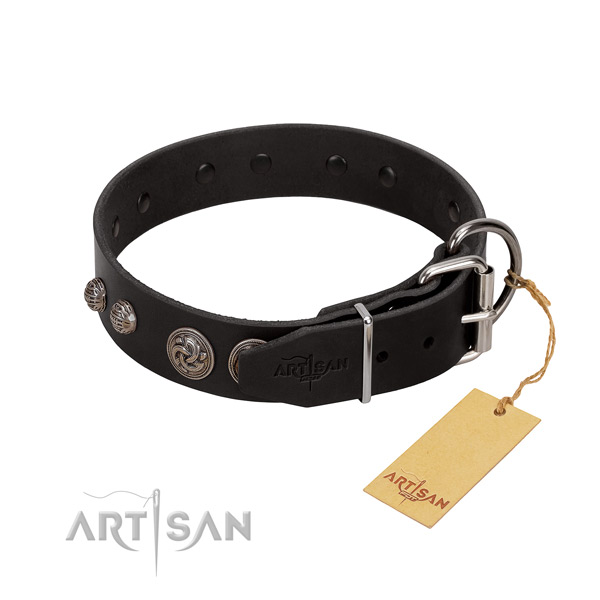 Fancy leather dog collar with sturdy fittings