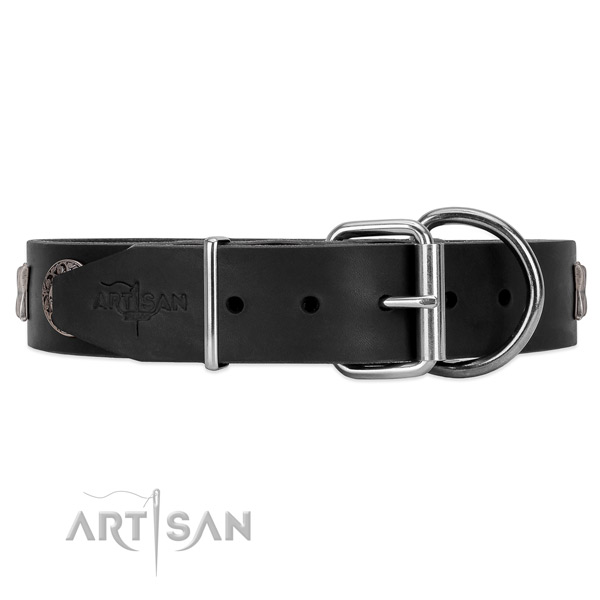 Leather dog collar with a great chrome-plated hardware