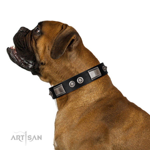 Elegant leather Boxer collar for comfortable daily use