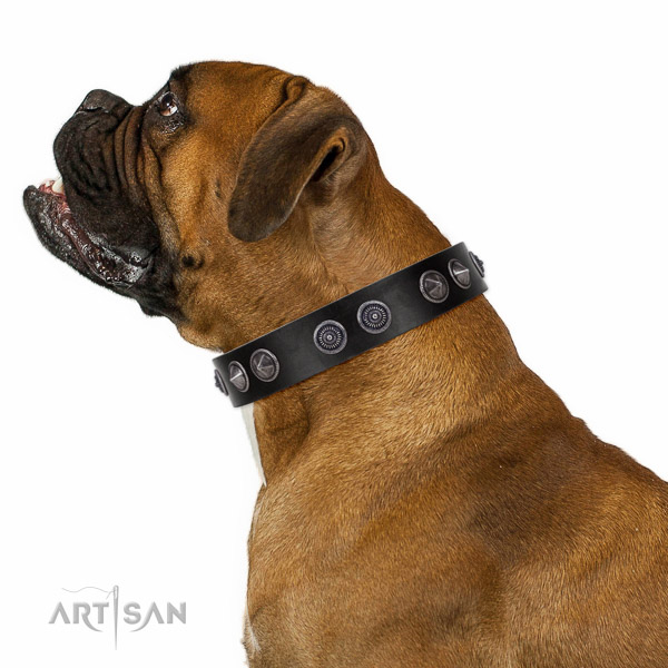 Extraordinary walking black leather Boxer collar with