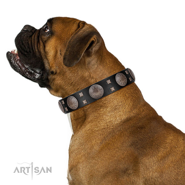 Extraordinary walking black leather Boxer collar with chic decorations