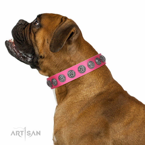 Extraordinary walking pink leather Boxer collar with