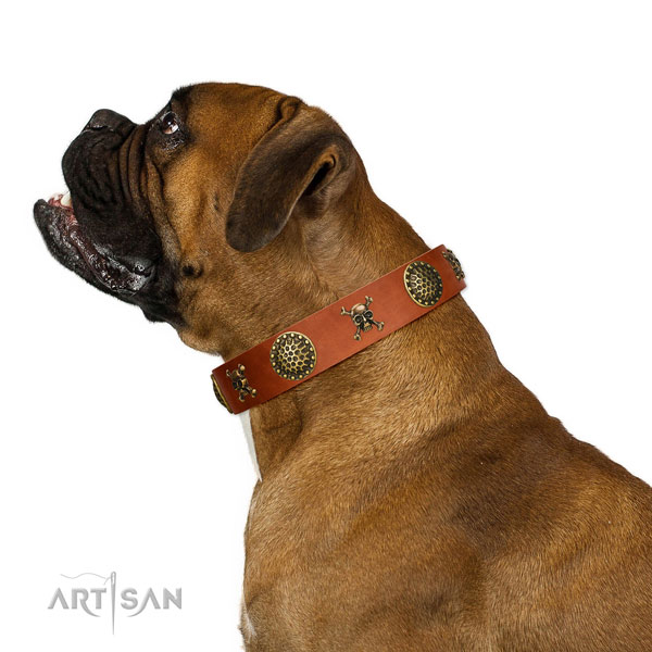 Beautiful leather Boxer collar for walks