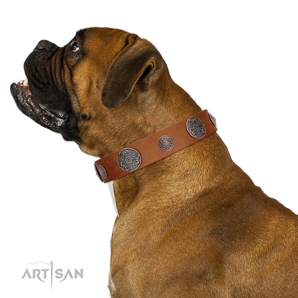 Quality leather Boxer collar created to last