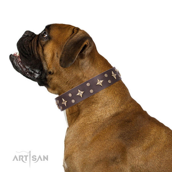 Boxer exceptional genuine leather dog collar with decorations