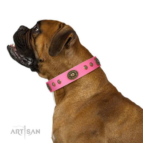Boxer walking dog collar of stylish natural leather