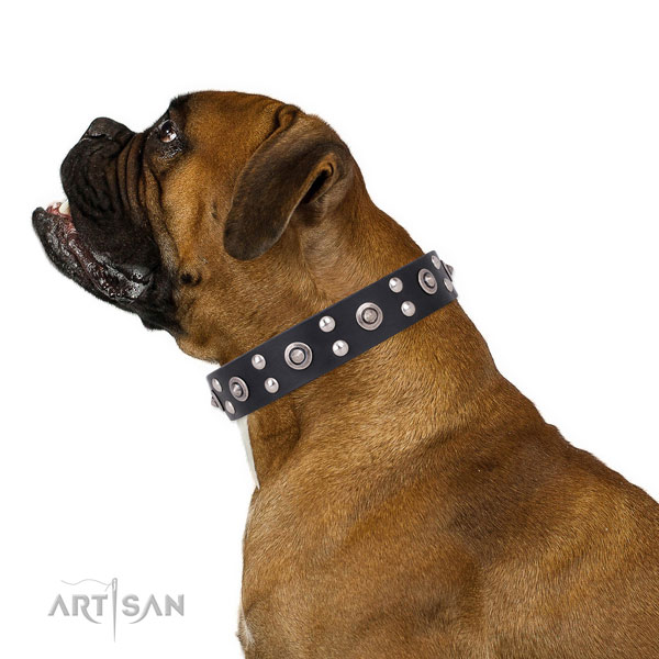 Boxer decorated leather dog collar with embellishments
